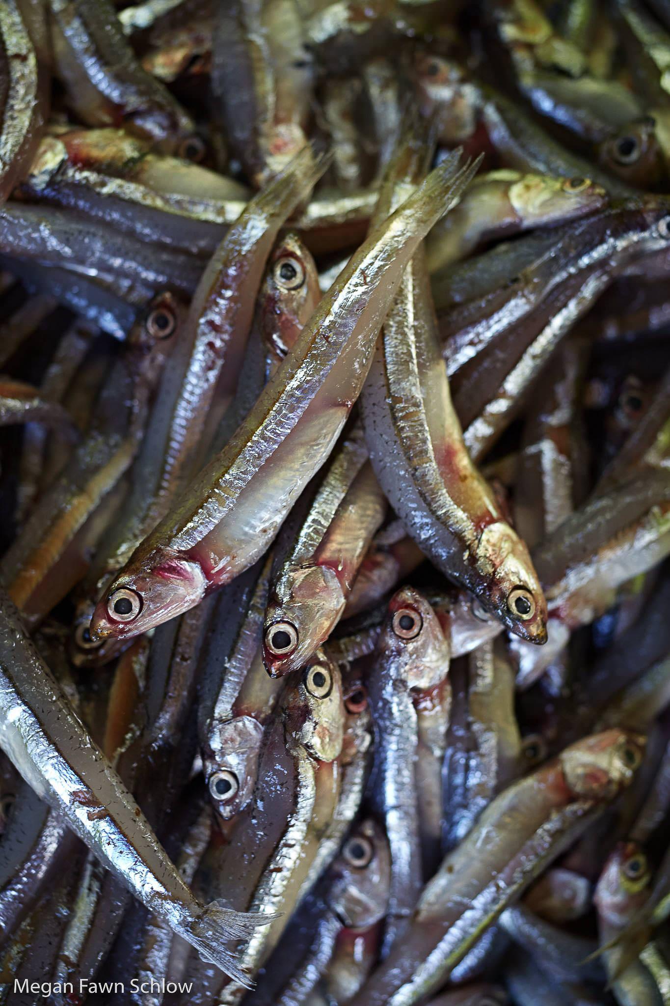 Fischsauce-Red-Boat
